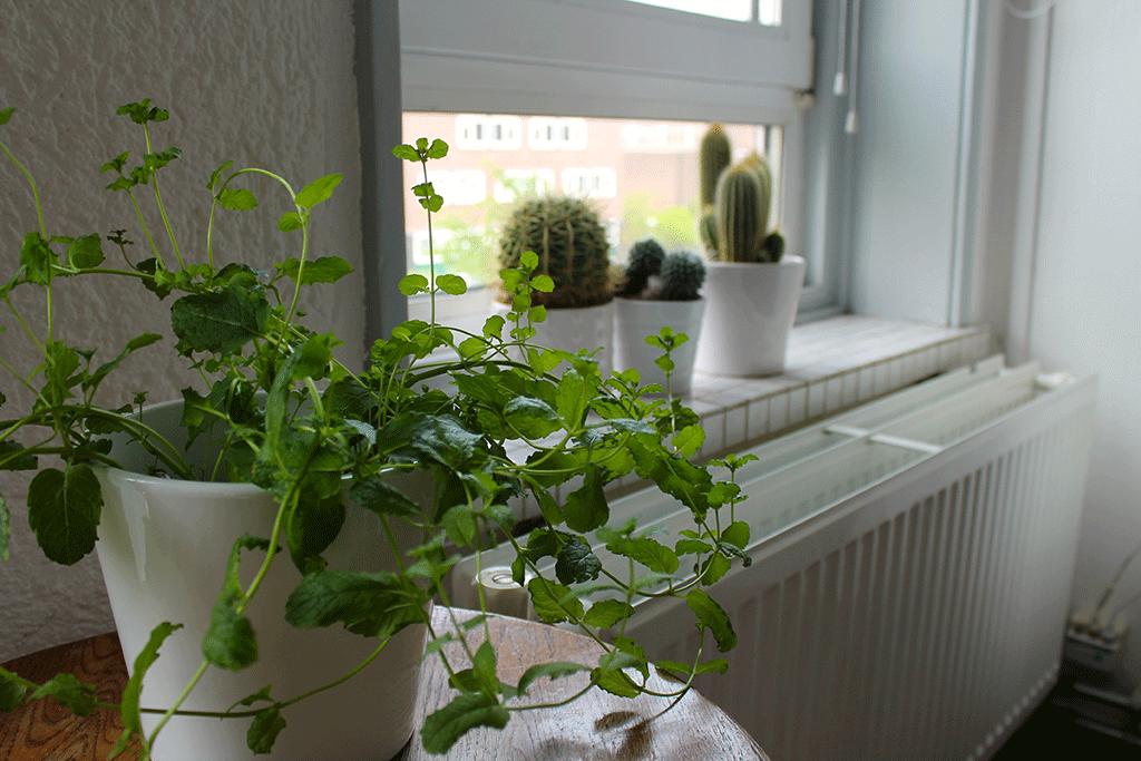 catiemccartney-plant-3